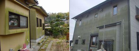 外壁材のコケ